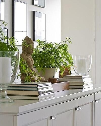 House Plants in the Kitchen