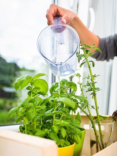Easy Plants to Grow in the Kitchen