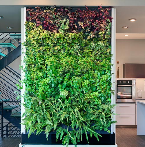 living wall in the kitchen