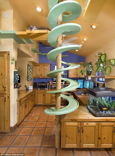 Feline Kitchen Playground