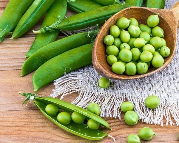 Grow Peas in Your Garden