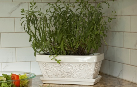 3 Ways Plants Make Your Kitchen Healthier