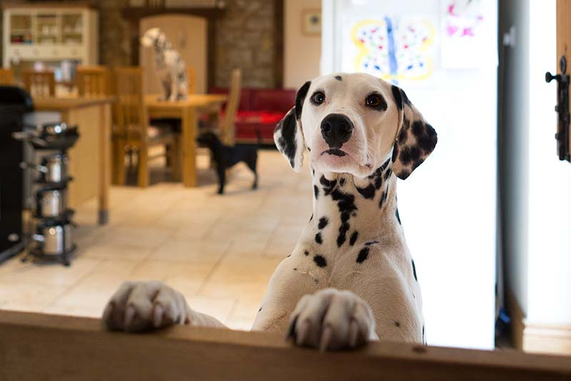 Pet Friendly Kitchen Ideas